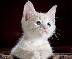 Verzorging huisdieren aan huis - FlorencePas