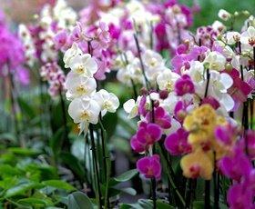 orchid-3479539_1920 stockbeeld orchidee