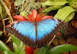 Vlinders aan de Vliet - blauwe vlinder